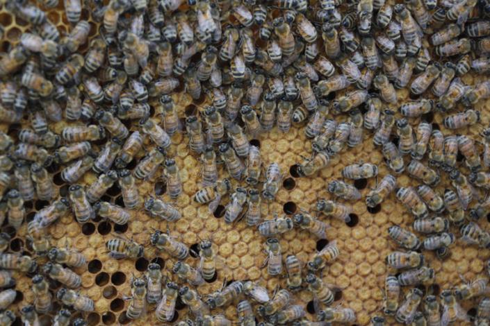 Miel aveyronnais de qualité